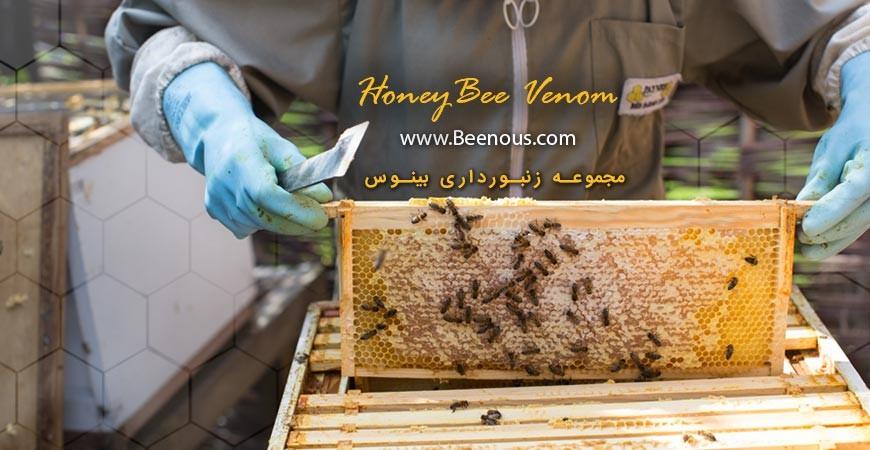 نیش زنبور عسل: دردناک اما با فوایدی بالقوه